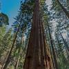 Yosemite2016-5866.jpg