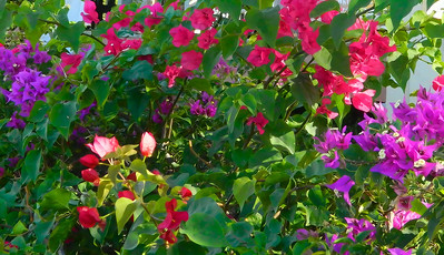 flowers in spanish town