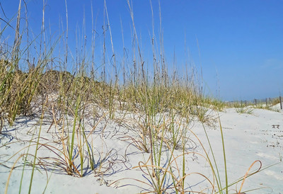 dancing beach grass