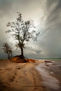 A lonely tree weathers the Sea and all nature has to throw at it. Town beach or Gadalathami as it is locally known is home to this sturdy tree. The tree roots are imbedded into the porous rock that is prevalent through out the area which is extensively mined for bauxite.