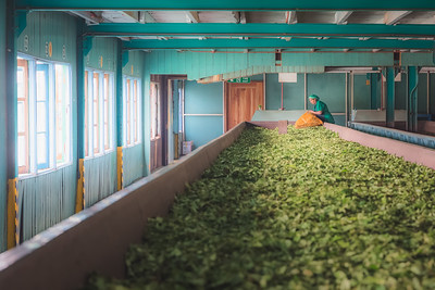 Tea Factory, Sri Lanka
