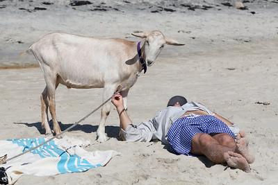 Beach Goat