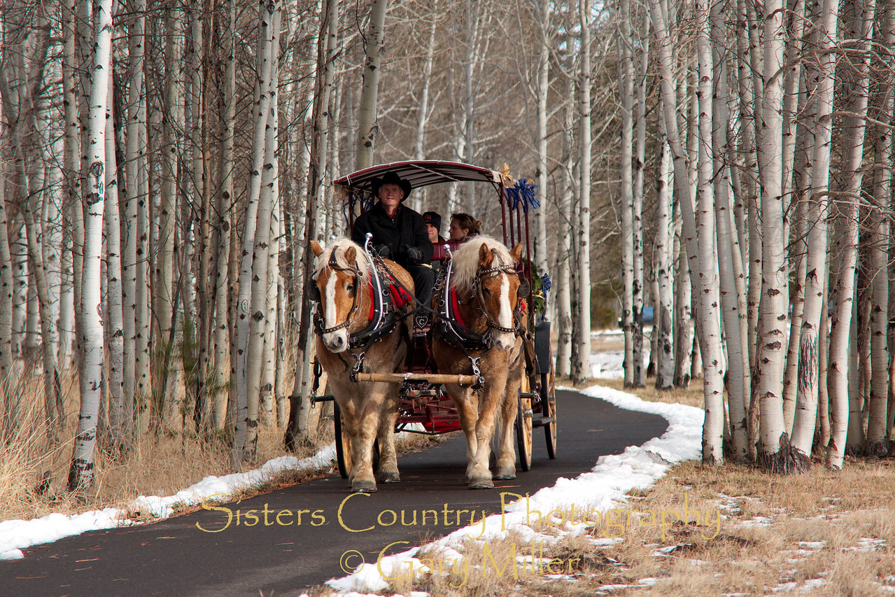 Tony and Kierstan's New Years Carriage Ride. Tony Wilson schocks Kierstan Vettrus with an 'on the knee' wedding proposal during a New Year's Day horse carriage ride at Black Butte Ranch - Sisters, OR. Photographer Gary Miller got wind of the plans from the wranglers and laid in wait for the carriage to arrive.