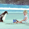 11001-29611 Erect-created penguin (Eudyptes sclateri) moulting bird watching child *