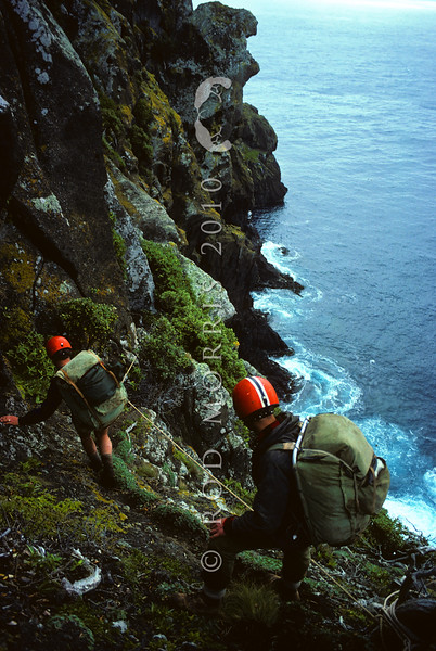 11001-82021 Black robin (Petroica traversi) Dick Veitch and Don Merton climb down the cliff track on Little Mangere, after the 1976 black robin rescue