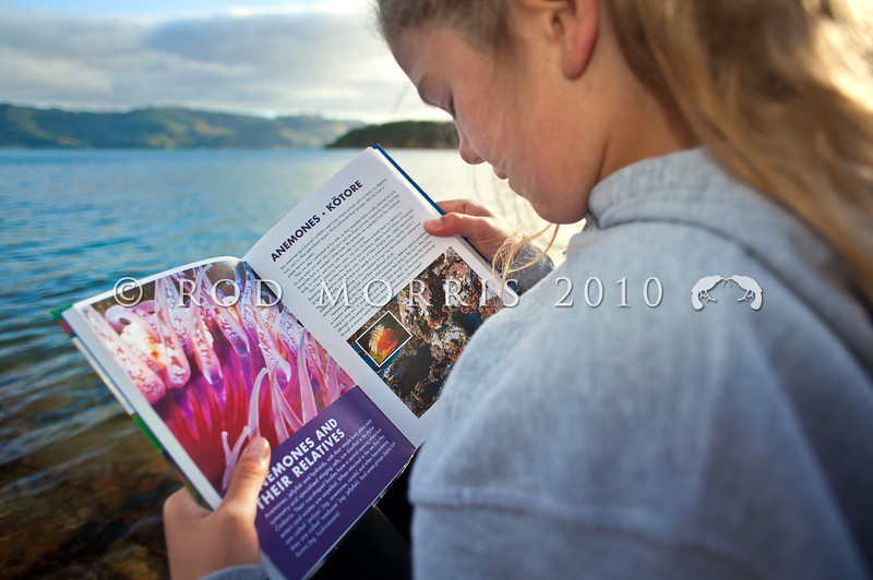 DSC_5154 Josie learns about sea anemones and their relatives from the 'Collins Field Guide to the New Zealand Seashore'. There are a variety of print and electronic guides available in New Zealand, to help amateur marine biologists when visiting the beach. Portobello, Otago Peninsula *