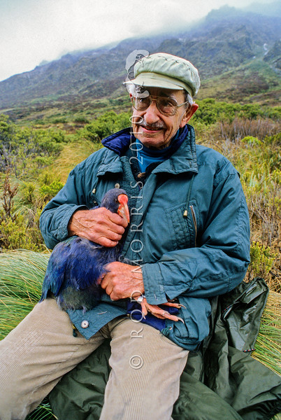 11000-05101 Takahe (Porphyrio hochstetteri) with it's re-discoverer, the late Dr Geoffrey Orbell (1908-2007). This picture was taken almost fifty years after Orbell re-discovered the 'notornis', near this spot on November 20,1948. 'Doc' Orbell was ninety at the time Rod took this photo in Takahe Valley, October 1998