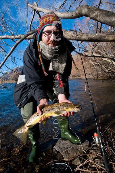 DSC_5902 Brown trout (Salmo trutta) lake fish, caught on a winter license in Lake Pearson.