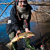 DSC_5902 Brown trout (Salmo trutta) lake fish, caught on a winter license in Lake Pearson.