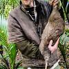 DSC_0361 Western brown kiwi (Apteryx mantelli) *