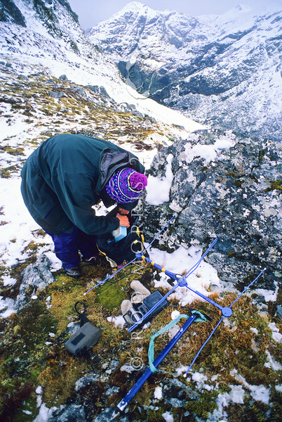 11000-52202 Takahe (Porphyrio hochstetteri) a field researcher unpacks radio-tracking gear to locate breeding pairs in early summer. Murchison Mountains *