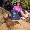 11001-49721 Stewart Island weka (Gallirallus australis scotti) feeding on beach near a visitor to island *