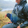 11001-51305 Takahe (Porphyrio hochstetteri) with wildlife officer Hans Rook, in the Miller Peak study area during a banding study in the 1970's. Miller Peaks, Murchison Mountains *