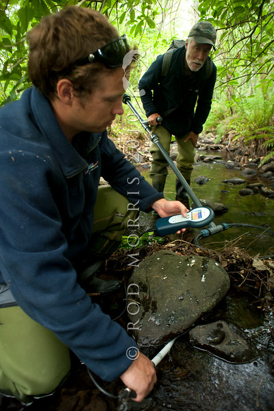 DSC_7196 Pouched lamprey (Geotria australis) NIWA freshwater scientists Don Jellyman and son Phillip, search for lamprey nests in a boulder strewn stream. Once the eggs hatch, the ammocoete larva drift downstream and bury themselves in the mud for the first four years or so of their life, before eventually transforming into macropthalmia, and migrating to the sea.