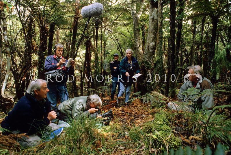 11001-10007 Stewart Island brown kiwi, or tokoeka (Apteryx australis lawryi), filming for the BBC series 'Life of Birds' on Bravo Island. Philip Smith in background watching Sir David Attenborough and the BBC crew beside a tokoeka burrow