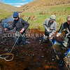 DSC_5173 Eldons galaxias (Galaxias eldoni) an electro-fishing team surveying Stony Stream in the Lammerlaw Range for Eldon's galaxias -a roundhead lineage found in the Lower Taieri.