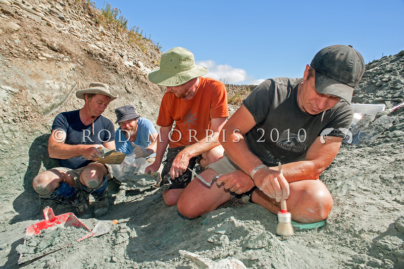 DSC_8772 New Zealand and Australian palaeontologists excavate 19-16 million-year-old (Early Miocene) lake-bed deposits near the Manuherikia River, St Bathans, central Otago *