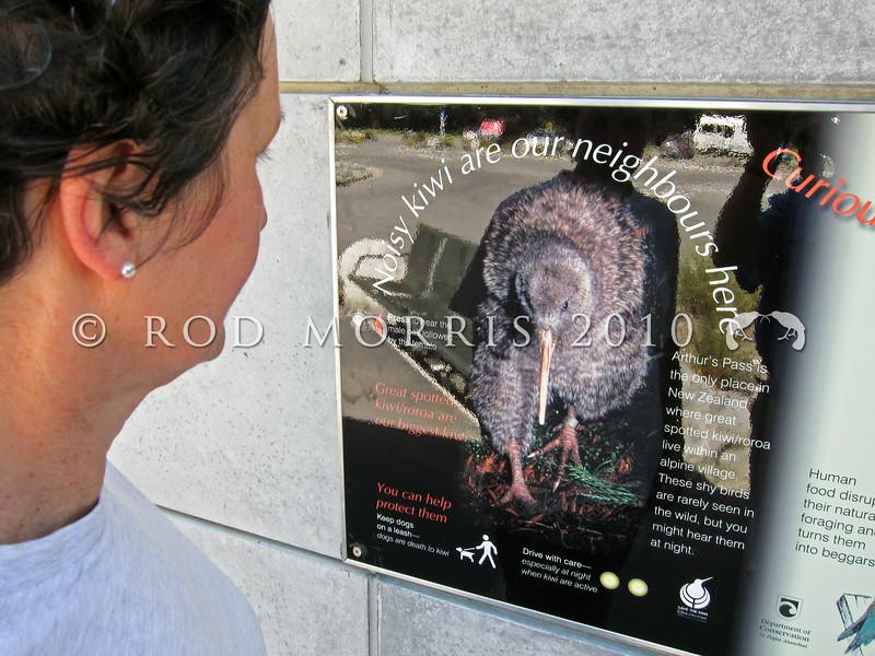IMG_0023  Great spotted kiwi (Apteryx haastii) community sign on railway station wall at Arthurs Pass