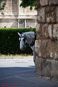 Horse in Serville