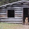 425 - Cabin Dog