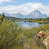 30 - Grand Teton and Jackson Lake with Scotch