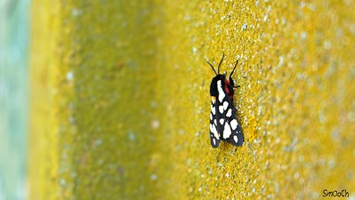 Some kind of butterfly.... River Po, Comacchio, Italy