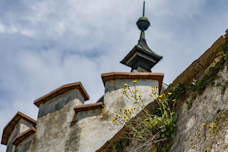 Weeds growing in turret
