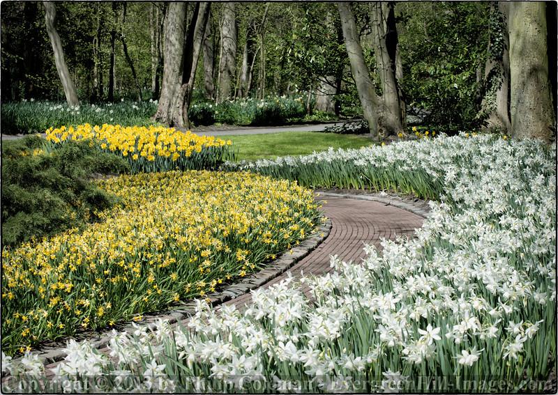Daffodil Trail