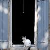 St. Remy Feline