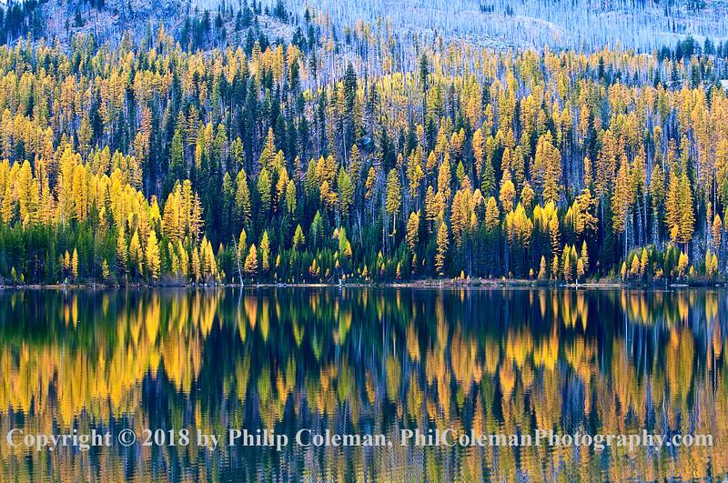 Olive Lake trees, fall, Oregon