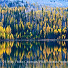 Olive Lake trees, fall, Oregon