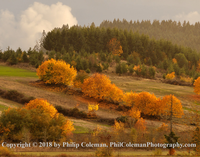 Autumn in the Coastal Range Foothills