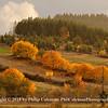 Autumn in the Coastal Range Foothills