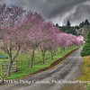 Blossom Lane, Oregon