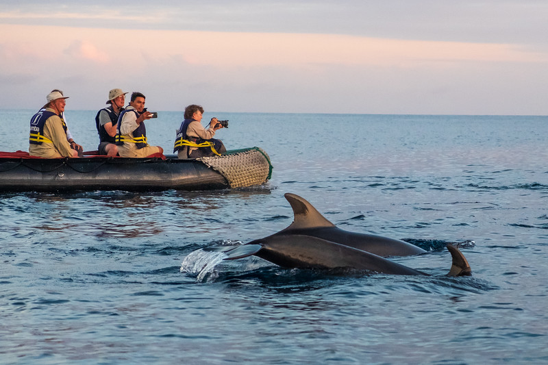 Pre sunset dinghy ride off James Bay, Santiago Island,  following frolickiing dolphins