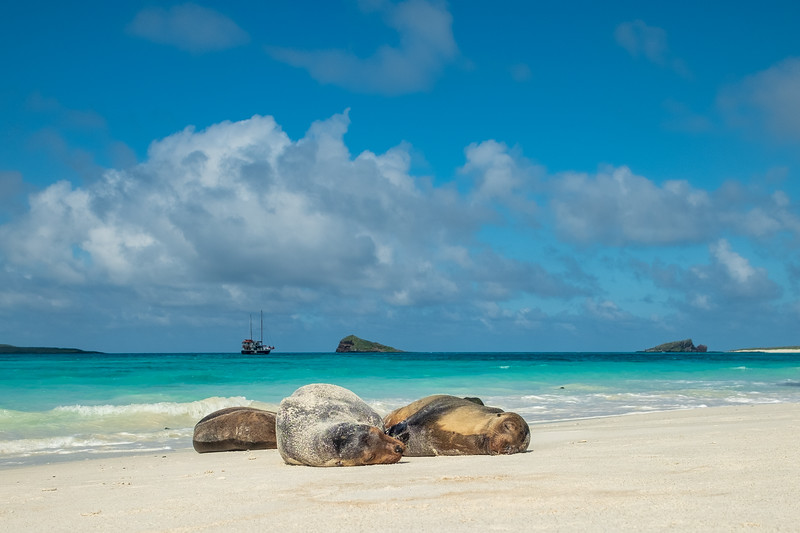 Sea lions basking on beach at Gardner Bay on Espanola Island. Samba in the background.