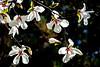 Spring-Dominion Arboretum-8958