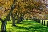 Photoboyz Ouitng-Tree Alley-9002