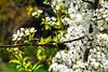 Photoboyz Ouitng-Flowering Apple Tree-9022