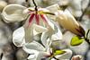 Spring-Flowering-8950