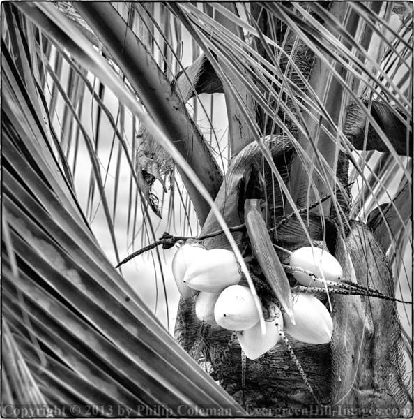 Baby coconuts