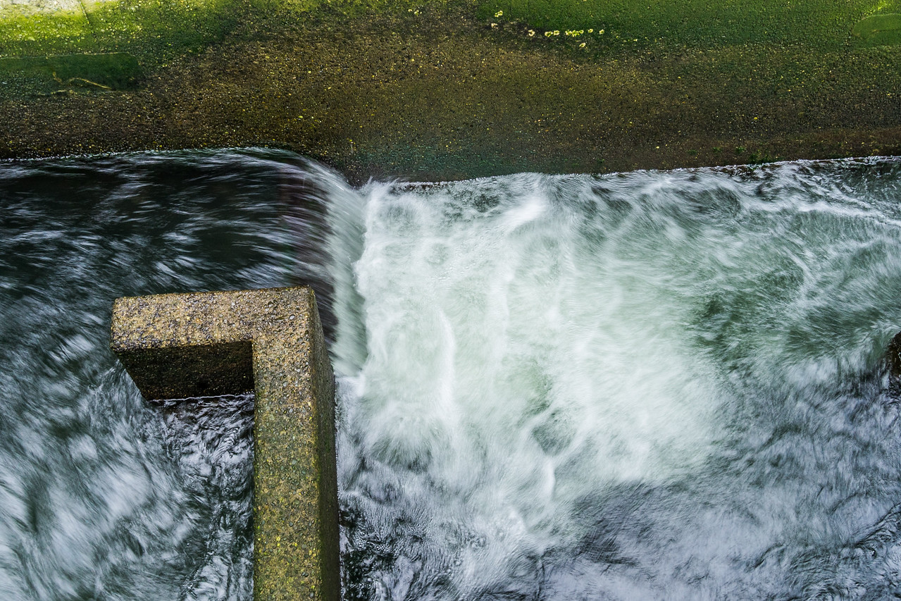 Fish Ladder at Ballard Locks