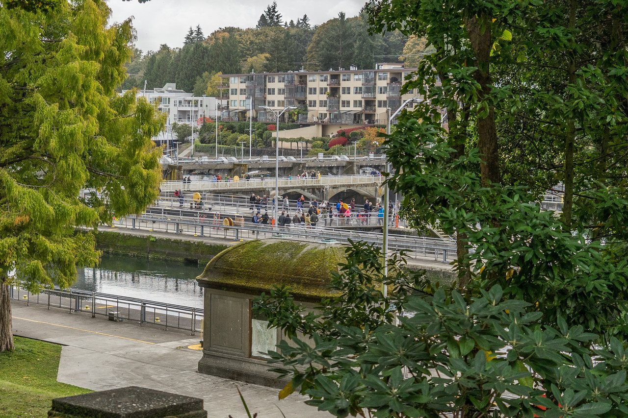 Ballard Locks from Botanical Garden
