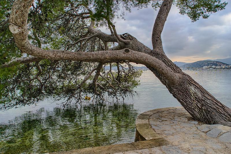 Mallorca, Pine Walk, Port de Pollenca