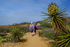 Hiking the Yucca Point  Trail in Torrey Pines