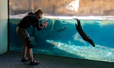Jessie photographing otters