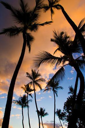 Palm Trees Lahaina Hawaii