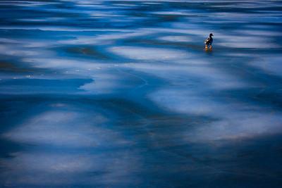Lone Duck