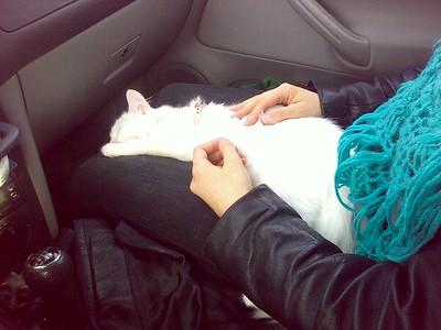 Pilvi relaxing in the car