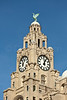 Clock Tower of the the Royal Liver Building, Liverpool